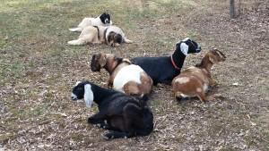 The gang waits